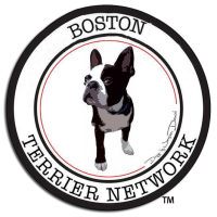 Welcome to our Boston Terrier Network