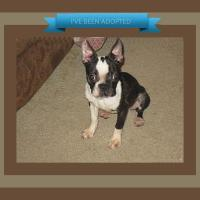 ADOPTED  -  Kayla Bee