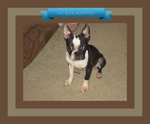 kayla bee adopted