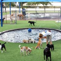 Amongst Dogs:  Romping in dog parks