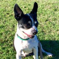 ADOPTED - Dolly