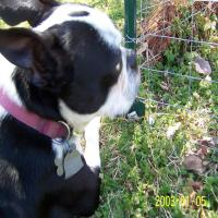 HINTS FOR LIVING WITH A BLIND DOG Part 1 of  3
