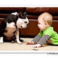 Okay so Babies Cry and Dogs Bark