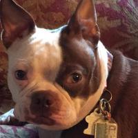 NEWS FLASH! SERVICE DOG WALK
