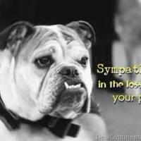 Memorializing a Pet