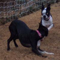 How do you know when one dog is dominant over another?